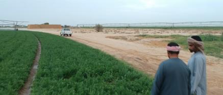 wadi-2